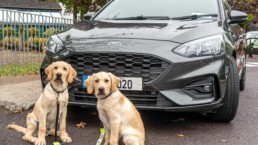 You could win a Ford Focus and support the Irish Guide Dogs for the Blind!
